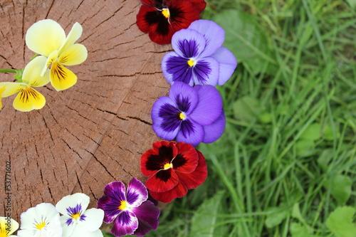 виола, карнавал цветов
