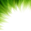 Vector Illustration of an Abstract Green Nature Background