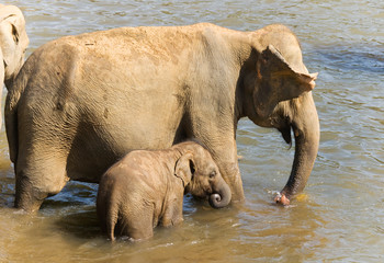 Elephant baby with mother in the river