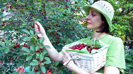 Young woman in a cherry orchard