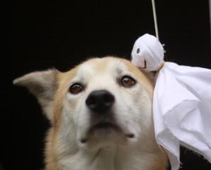 犬とテルテル坊主