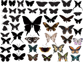 color and black butterflies collection on white