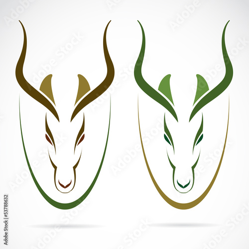Vector image of an head impala and horns.