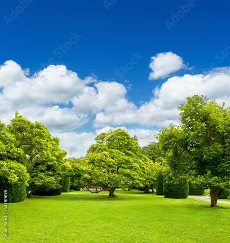 beautiful park trees over blue sky. formal garden