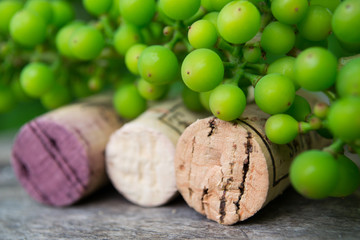 Wine bottle with wine corks on nature background