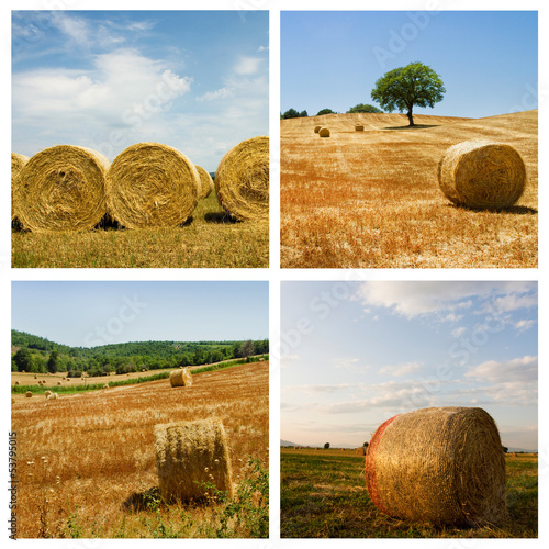 Hay field collage