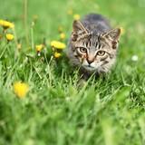 Kitty lurking in grass - 53796090