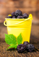 blackberries in a small bucket