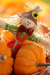 Scarecrow and little pumpkins on defocised autumn background