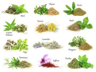 Zbiór świeże i suche zioła aromatyczne