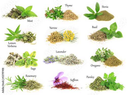 Fototapeta Collection of fresh and dry aromatic herbs