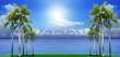 beautiful palm tree on green field with blue sea water backgroun