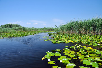 Swamp vegetation in the Danube Delta