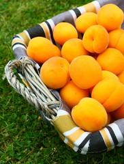panier d'abricots dans l'herbe