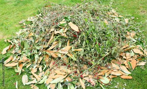 Papiers peints Vegetal tas de branchages pour compost