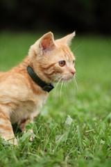 Little cat sitting in grass