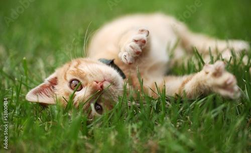 Deurstickers Kat Little cat playing in grass