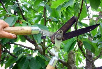 tailler les branches d'arbre avec un taille sécateur