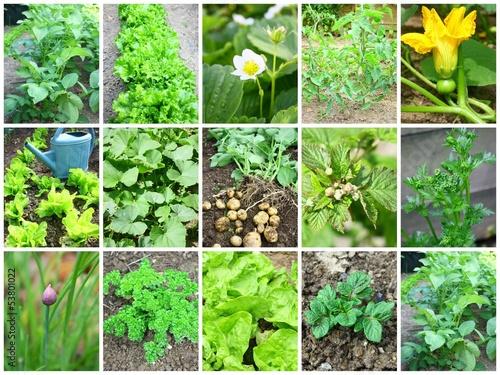 composition légumes et végétaux au potager
