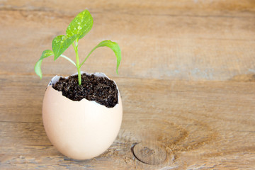 Young green plant in eggshell