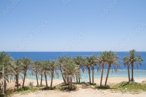 Beach landscape, palms and sea - Sharm El Sheikh