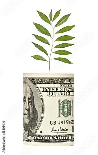 sapling growing from dollar bill