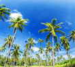 Palm trees natural background. blue sky and tropical plants