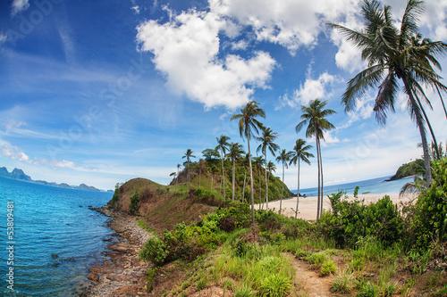 Foto op Plexiglas Indonesië Palm and tropical beach