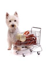 Hund Westie and Cart