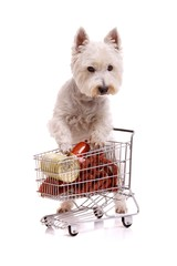 Hund beim Einkaufen
