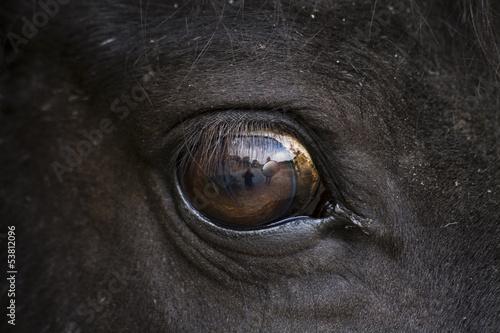 Fototapeten,eye,auge,pferd,schlagen