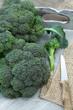 Frisch geernteter Brokkoli