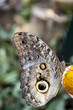 Butterflies in an ecological oasis