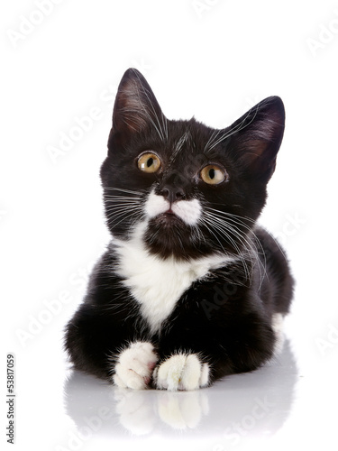 The black and white kitten lies on a white background.
