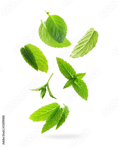 Green mint leaves isolated on a white background. - 53819088