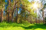 Fototapety Forest landscape