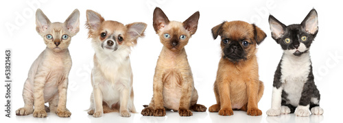 Group of kitten and puppies on a white background