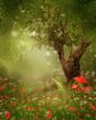 Stare drzewo na łące z czerwonymi makami i muchomorami