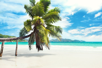 Palmenstrand Seychellen