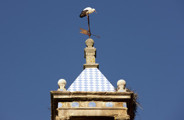 Storks nest on roof
