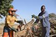 Holzsägen in Afrika