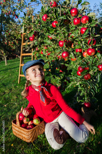 Apple harvest - Young girl with picked red apples in  basket