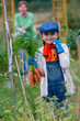Gardening, harvest - lovely girl with bunch of carrots