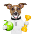canvas print picture - fitness and healthy dog