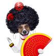 spanish dog