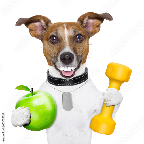 canvas print picture fitness and healthy dog
