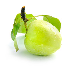 Fresh green apple are on a white background