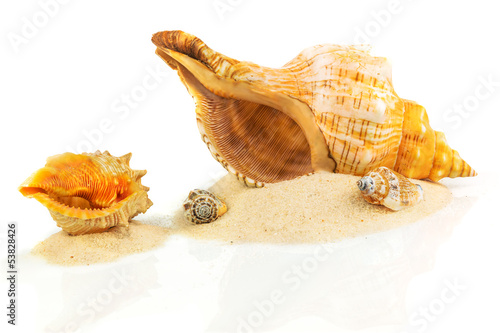 Spa concept with seashells