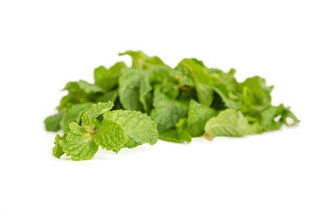 three fresh mint leaves isolated on white background. Studio mac