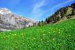 Swiss natural landscape